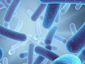 Legionella Pheneumophila - Waterpedia